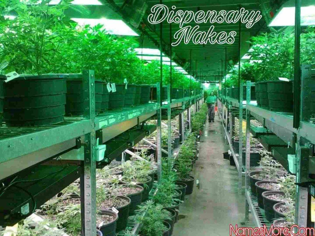 Dispensary Names