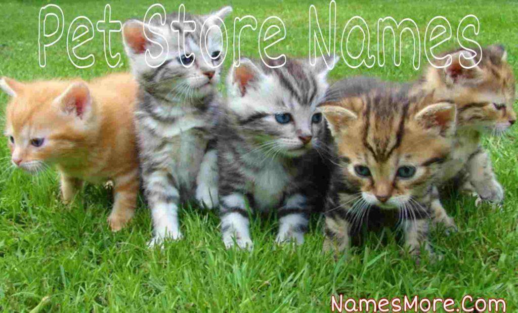 Pet Store Names